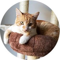 The vibrantplate CMO cat Gingi
